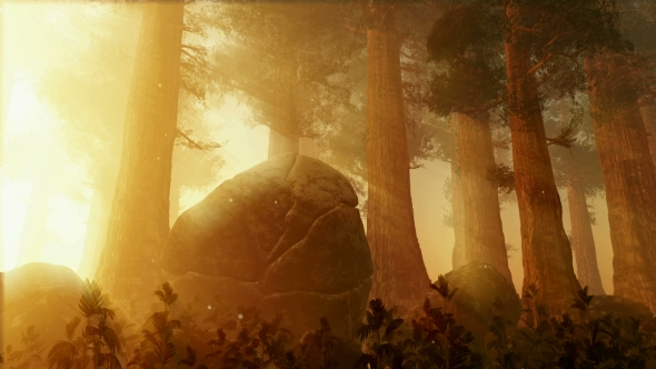Download Sunrays Shining Through the Trees nulled download