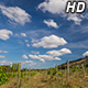 Clouds over Vineyard