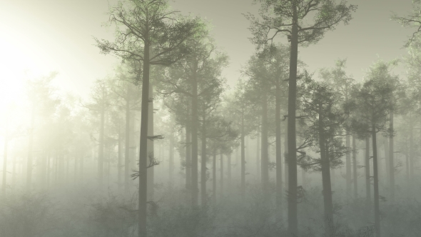 Download Morning Forest in Fog nulled download
