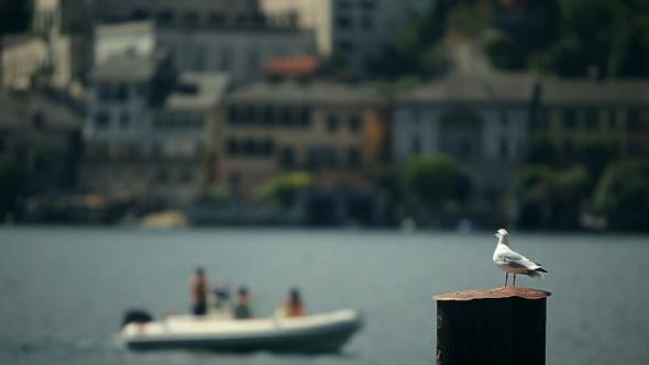VideoHive Seagull Background Sea 19081188