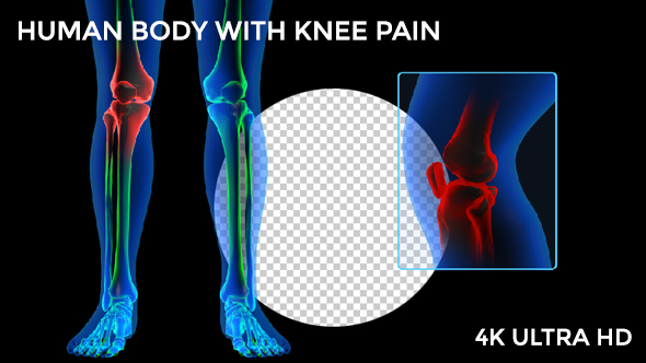 Download Human Body - Knee Pain nulled download