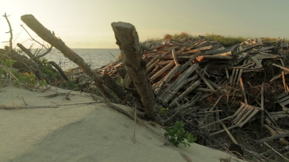 VideoHive Seashore and Dunes Covered with logs 19104671