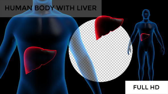 Download Transparent Human Body with Liver Full HD #1 nulled download