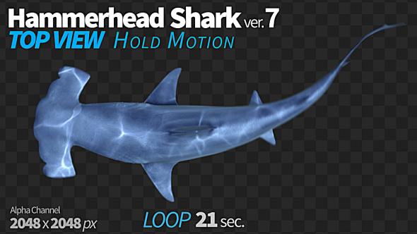 Download Hammerhead Shark 7 Top View nulled download