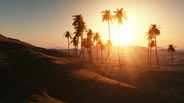 Download Palms in Desert at Sunset nulled download