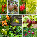 Different trees and fruits. collection of fresh ripe fruits and