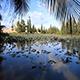 Beautiful Lotus Lake