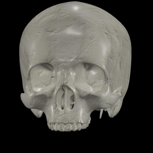 skull model - 3DOcean Item for Sale