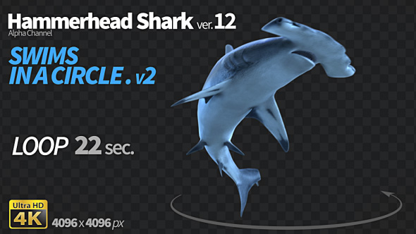 Download Hammerhead Shark 12 Swims in a Circle-2 nulled download
