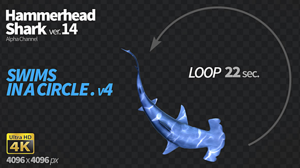 Download Hammerhead Shark 14 Swims in a Circle-4 nulled download