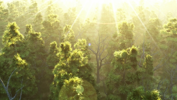 Download Green Forest at Sunset nulled download