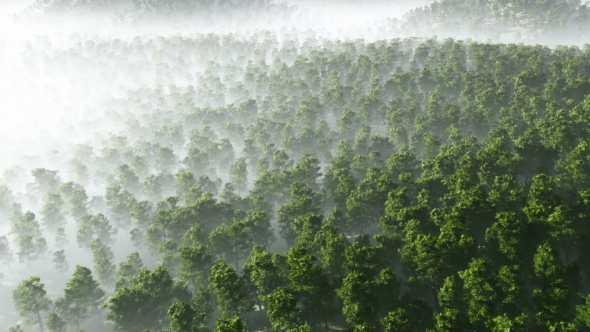 Download Morning Fog in Dense Tropical Eainforest nulled download