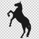 Horse Pesade Silhouettes - 2 Scene