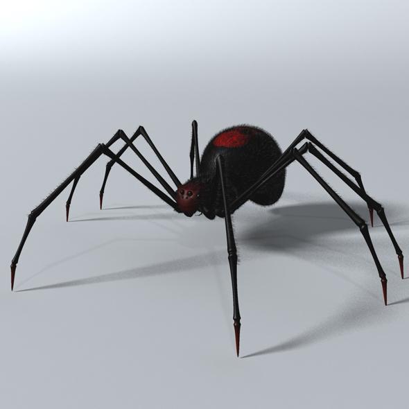 Black Spider Rigged - 3DOcean Item for Sale