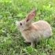 Cute Rabbit Sitting on the Grass