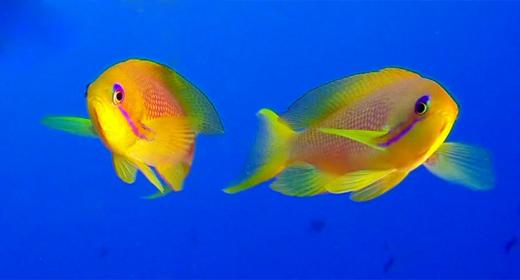 Underwater Colorful Coral Reef