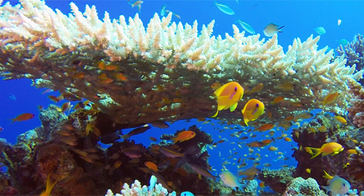Underwater Colorful Table Coral