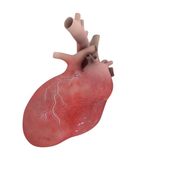 3D Heart - 3DOcean Item for Sale