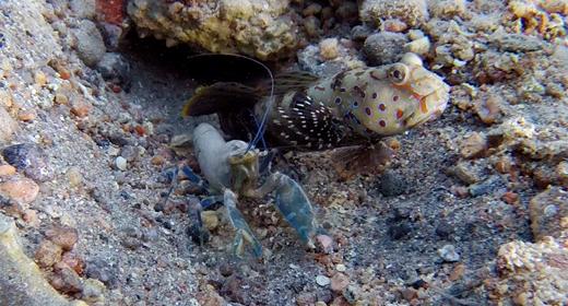 Underwater Shrimps And Crabs