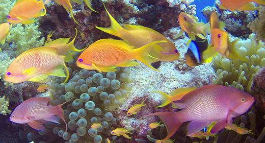 Underwater Colorful Fish