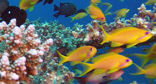 Underwater Colorful Life