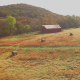 Aerial of Round Hay Bales on Farm