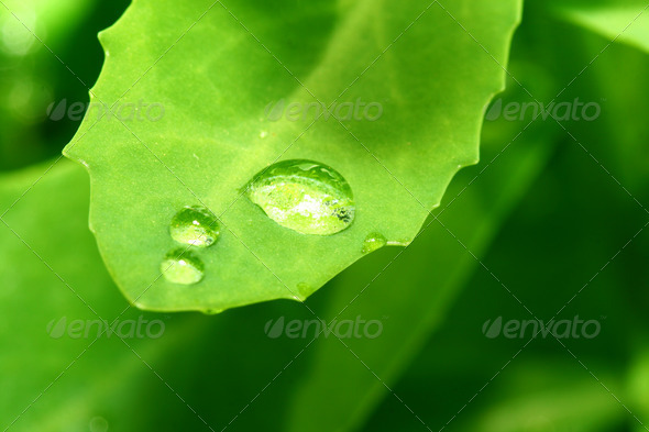 natural waterdrop - Stock Photo - Images