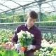 Gardener Examining Flowers in Gardenhouse