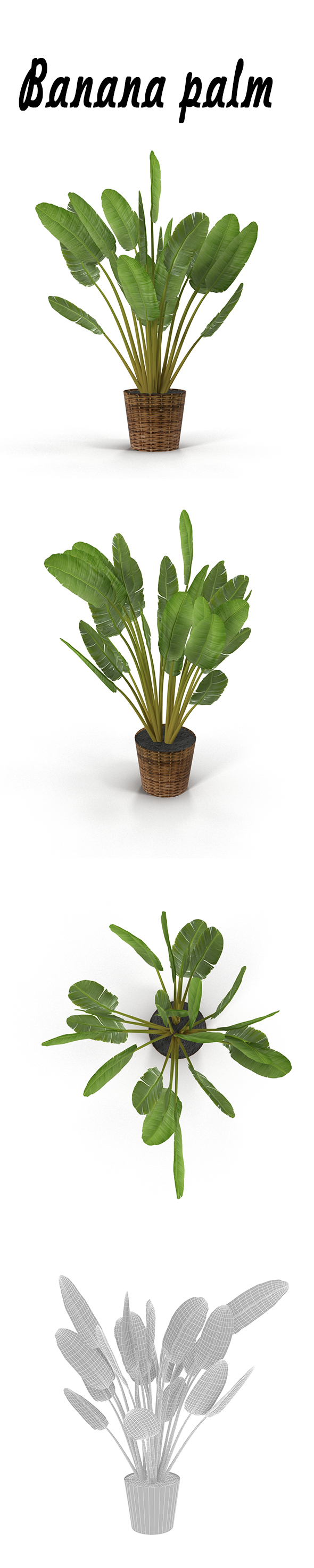 Banana palm in pot - 3DOcean Item for Sale