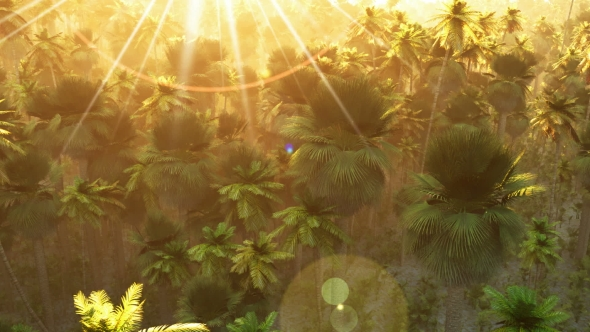 VideoHive Tropical Palm Forest at Sunset 19269050