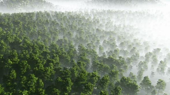 VideoHive Morning Fog in Dense Tropical Eainforest 19269092