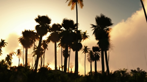 VideoHive Palms in Desert at Sunset 19269122