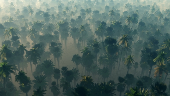 VideoHive Morning Fog in Dense Tropical Eainforest 19269137