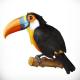 Toucan 3d Vector Icon