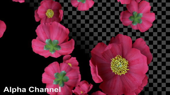 VideoHive Red Flowers 19274054