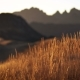 Yellow Autumn Grass Swaying in the Wind, Golden Mountain Hills on a Sunset