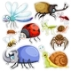 Sticker Set of Many Insects