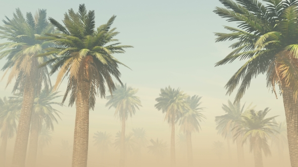 VideoHive Palms in Desert at Sunset 19277696