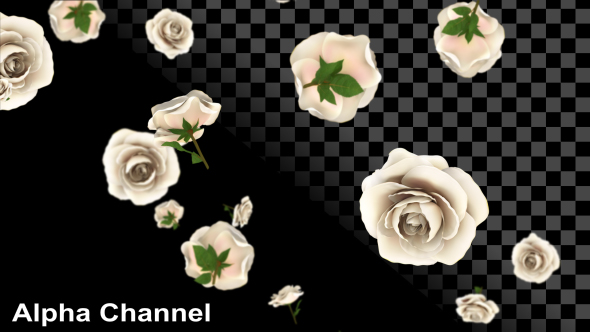 VideoHive Roses Wedding 19278876