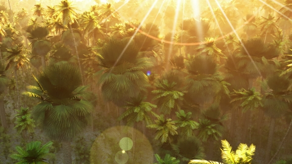 VideoHive Tropical Palm Forest at Sunset 19281485
