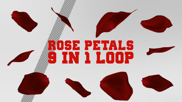 VideoHive Rose Petals Rotation 19282469