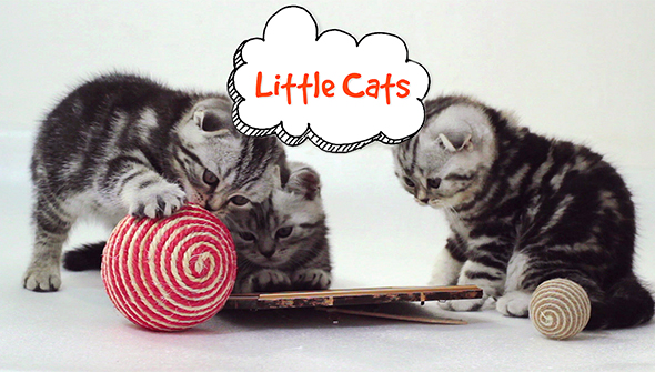 VideoHive Little Cats Slideshow 19287830