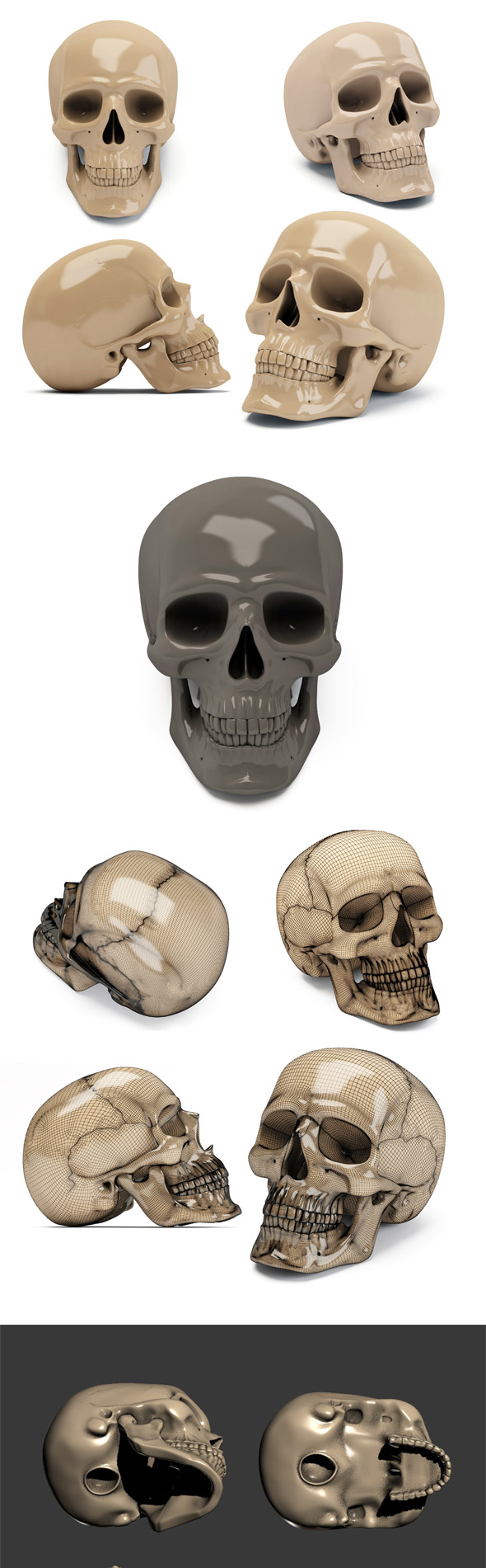 Human scull 3d print model - 3DOcean Item for Sale