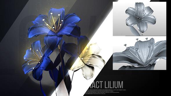 Lilium - 3DOcean Item for Sale