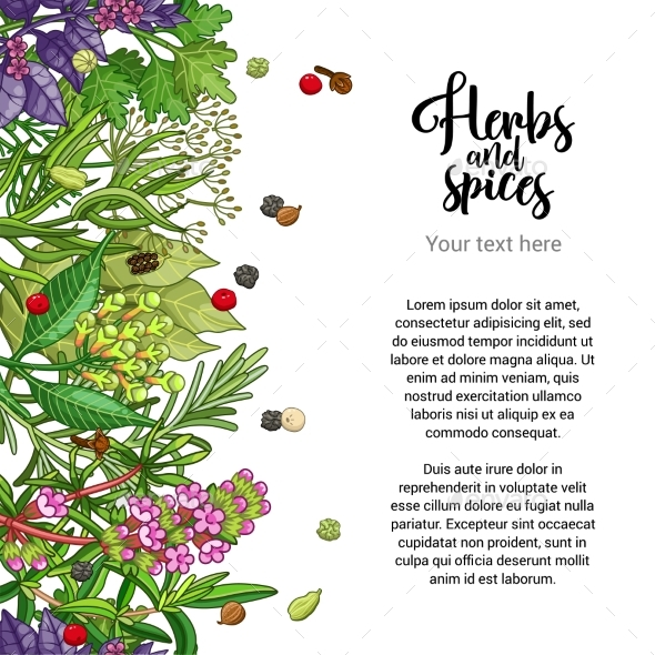 Graphicriver Vector Herbal Card Design with Spices and Herbs 19291765 torrent