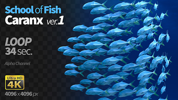 VideoHive School of Fish Caranx-1 19293890