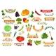 Download Vector Vegetables Vegetarian Emblems, Ribbons Set