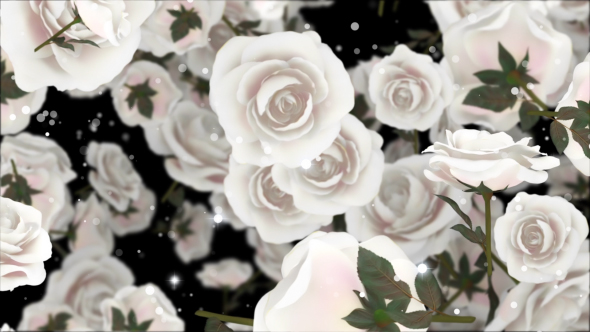VideoHive Roses White 19294780