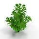 Ludwigia green