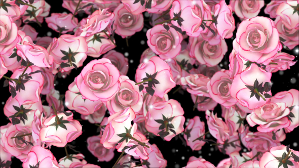 VideoHive Pink Roses 19300622